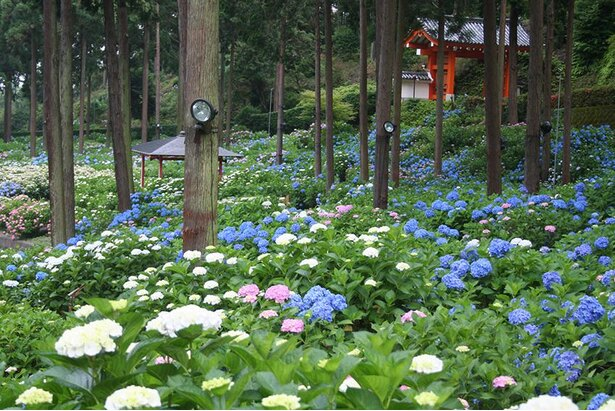 山門付近に広がる「あじさい園」。まるで絵巻物のような景観