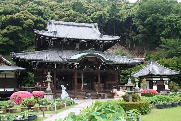 西国十番の観音霊場としても知られる三室戸寺