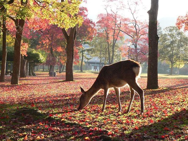 鹿に囲まれながらバードウォッチングができるかも
