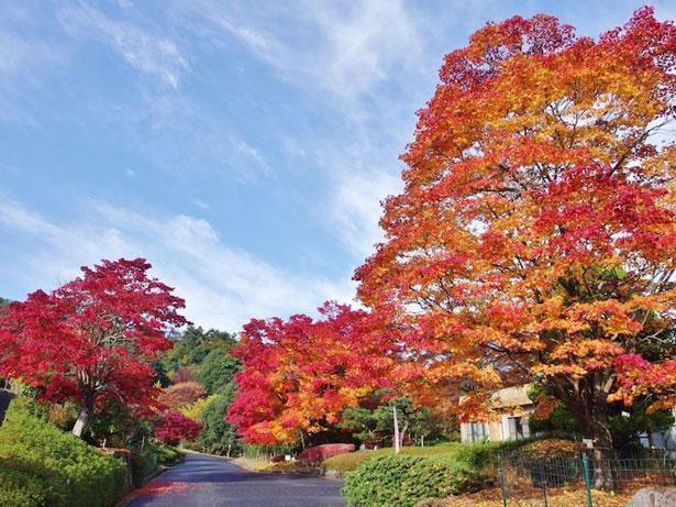 紅葉はもちろん、年間を通してさまざまな野鳥がやってくる