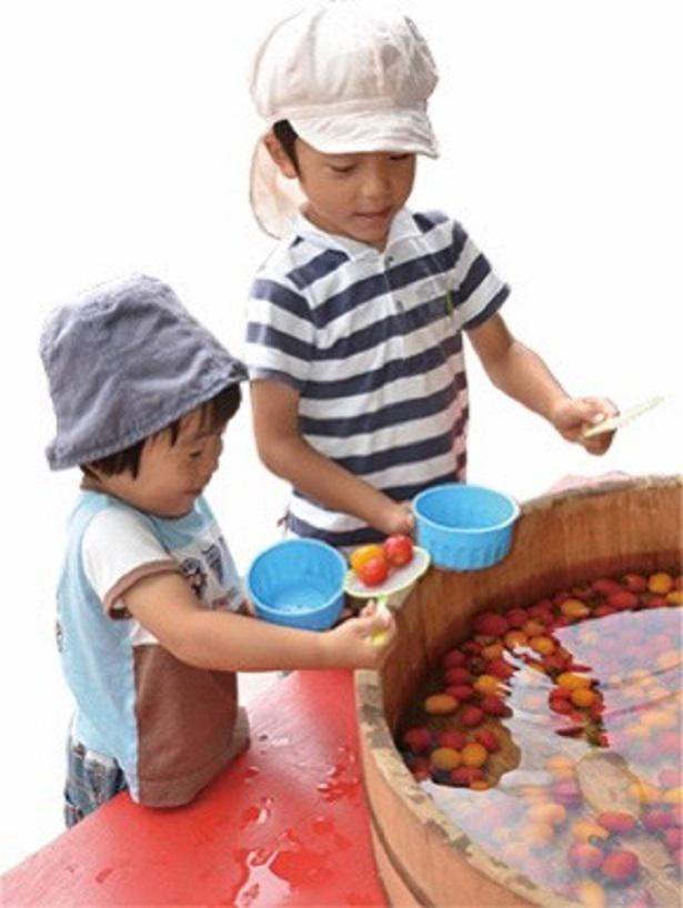 「トマトすくい」を楽しむ子どもたち