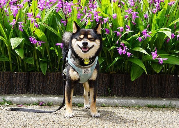 綺麗な花の前でニッコリ笑顔のこむぎくん