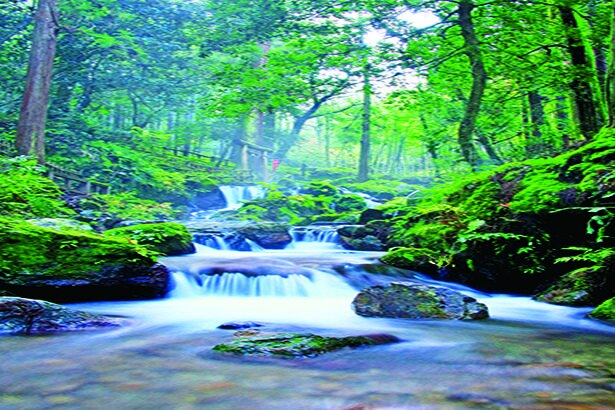 滝や天徳寺、庭園、あじさい広場を含む一帯は若狭瓜割名水公園。森の中の滝は清涼感満点/瓜割の滝