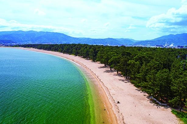 長さ約1.5キロにわたり白い砂浜が続くロマンチックな海岸。アカマツやクロマツが生い茂る林の中を散歩しよう/気比の松原