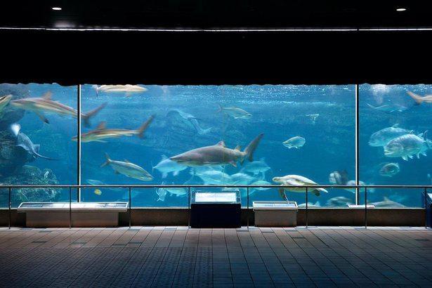 神戸市立須磨海浜水族園「波の大水槽」。特殊な装置によって波が打ち寄せる仕組みだ