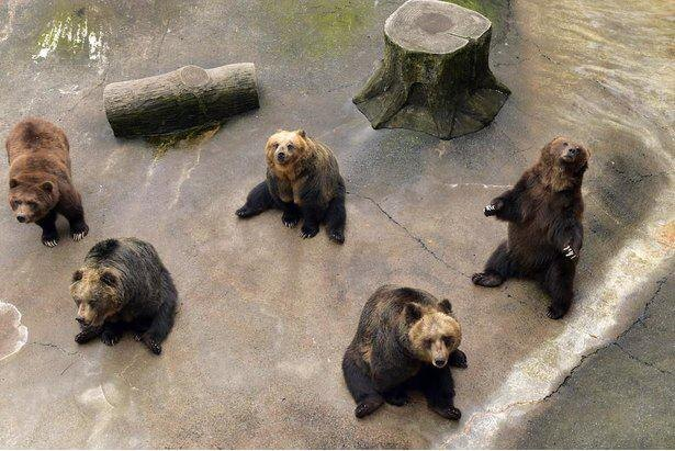 6種類約160頭のクマを展示する「ベアバレー」でおやつタイム。おやつをあげる時、クマたちが思い思いのポーズをしてくれる!
