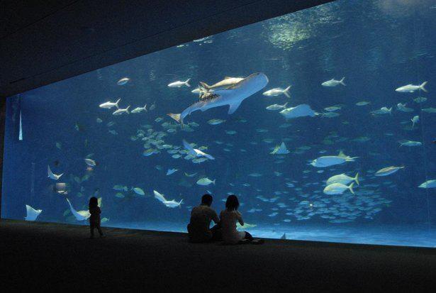 ジンベエザメやマグロやカツオなどが泳ぐ「黒潮大水槽」