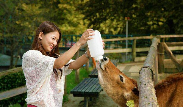 「子牛へのミルクあげ体験」。動物との間近でのふれあいに癒やされること間違いなし!