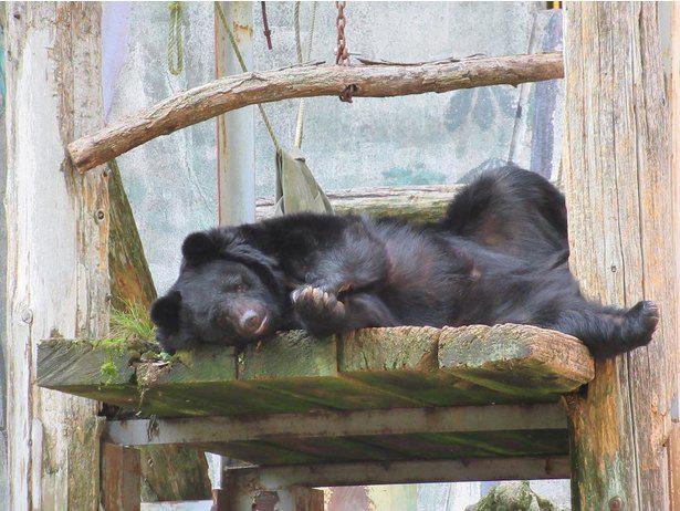 """バットを華麗に回す技を持つ、""""カンフー熊""""ことクマのクラウド君"""