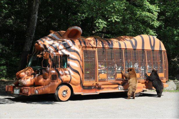 窓ガラスがない金網張りのバスでサファリゾーンを周遊するジャングルバス