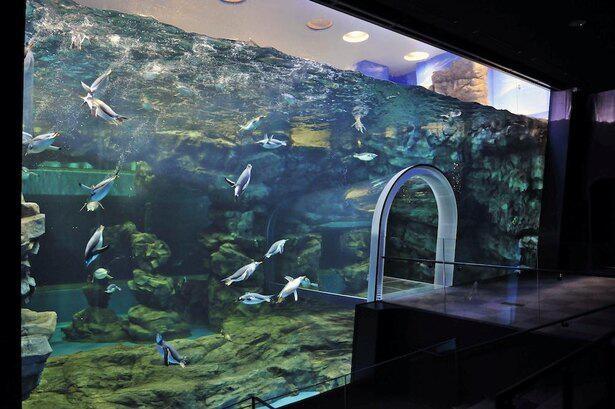 B1~1階にあるペンギン水槽は世界最大級