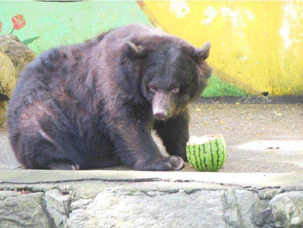 2015年(平成27年)から園長を務めるクマのベニー