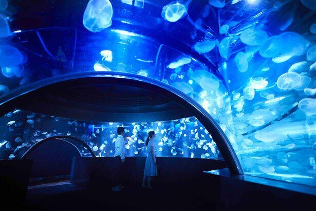 360度のパノラマ水槽「GURURI(グルリ)」。海中を漂いながら暮らすクラゲの生態が垣間見える