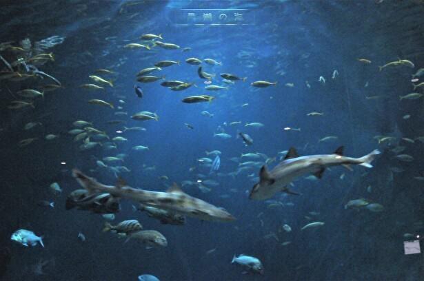 水量450トンという巨大な大水槽「黒潮の海」は館の目玉だ