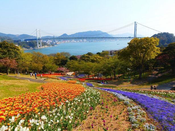 色鮮やかな絨毯のように花が咲き誇る 「火の山公園(山口県下関市)」