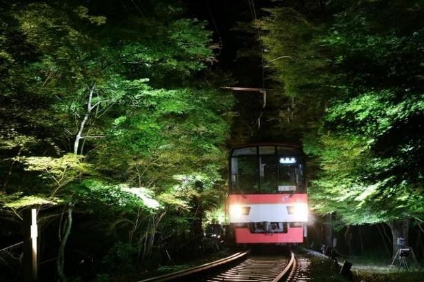 【写真】幻想的な「青もみじのライトアップ」トンネルを通過する「七夕伝車」
