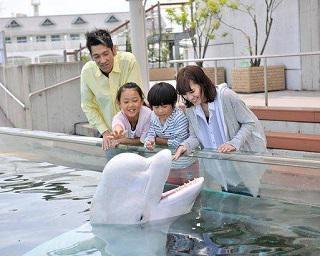【コロナ対策情報付き】横浜・八景島シーパラダイスを楽しみ尽くそう!水族館の見どころから混雑情報まで徹底紹介
