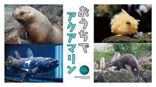 東北最大級の水族館「アクアマリンふくしま」で七夕まつりが開催!アザラシや河童もモチーフに