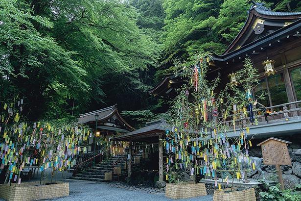 【写真】カラフルな笹飾りと緑が美しい、貴船神社の昼間の七夕飾り