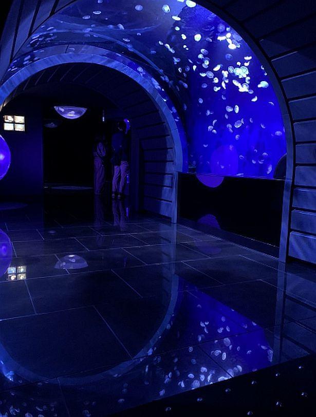 360度クラゲに囲まれる浮遊感を表現した「クラゲトンネル」