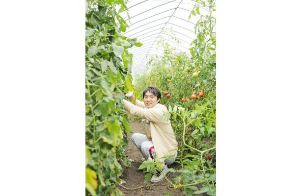 トマトのわき芽を取る筆者。野菜が実る様子を見るだけで感動