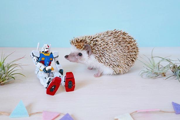【写真】ガンダム×ハリネズミのおもしろコラボ!フィギュアに興味津々