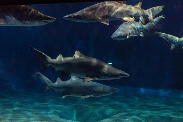 【コロナ対策情報付き】アクアワールド茨城県大洗水族館の楽しみ方!飼育種数日本一のサメや巨大水槽のマンボウが人気|ウォーカープラス
