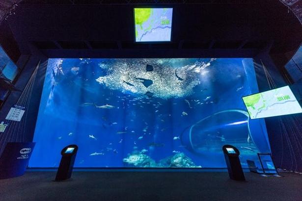 80種2万匹の魚が泳ぐ「出会いの海の大水槽」