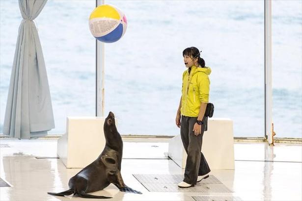 イルカやアシカのライブパフォーマンスは必見