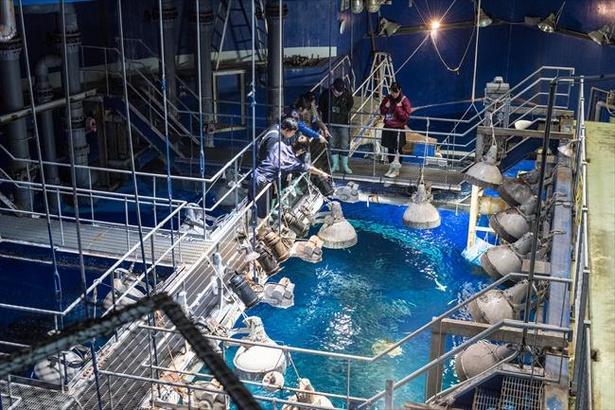 水族館の裏側を覗ける探検ツアー