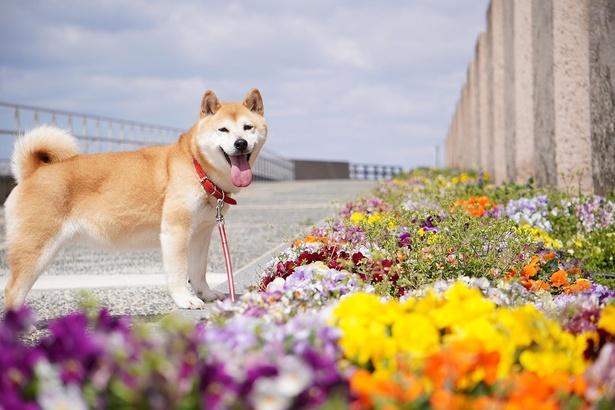 花がきれいに咲く時期に、お気に入りの舞子公園でカレンダー用の撮影