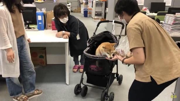 「お菓子作戦」決行中