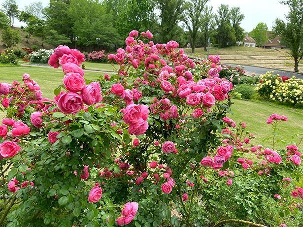 施設内は、季節ごとに美しい花々が咲き誇る