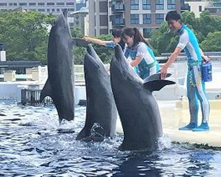 京都水族館でイルカの新プログラム!夏休みにピッタリな涼しいパフォーマンス