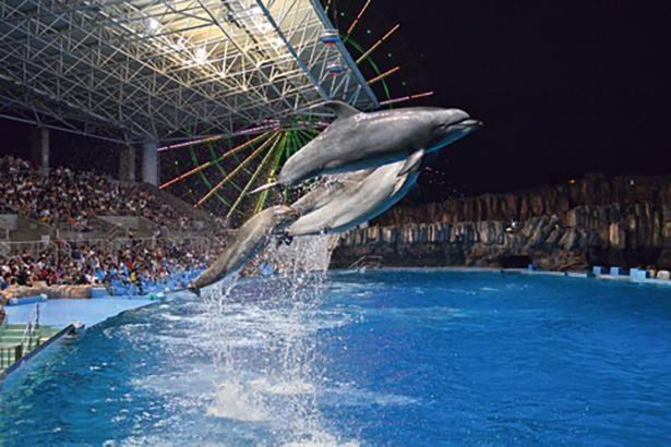 イルカのナイトパフォーマンスも楽しめる! / 名古屋港水族館