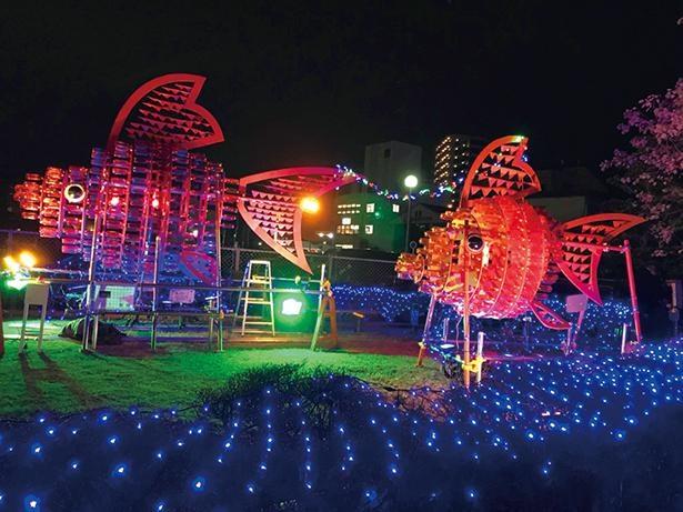 2020年8月1日(土)は、ワークショップ「巨大弥富金魚イルミネーションをつくろう!」を実施 / 博物館 明治村