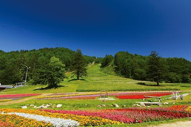 花のじゅうたんの横に広がる花畑もキレイ。レンゲショウマなどの山野草もかれんに咲く /「富士見台高原ロープウェイ ヘブンスそのはら」