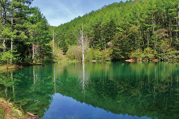 豊かな木々に囲まれた癒しの遊歩道、いわなの森。1周2.3km、自然を満喫しながら散歩できる /「富士見台高原ロープウェイ ヘブンスそのはら」