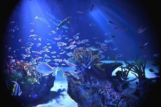 マリホ水族館で広島の水辺の生き物たちのリアルライフを観察!施設の楽しみ方を徹底紹介【コロナ対策情報付き】