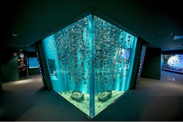 「カキいかだ」の海の中の状態を見られるのは広島の水族館ならでは