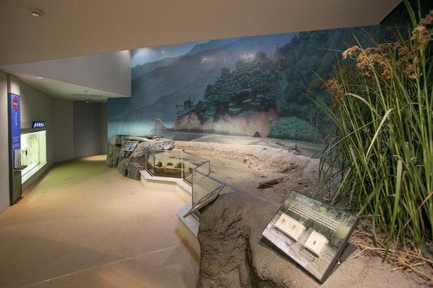 「宮島の干潟」は、瀬戸内海特有の大きな干満の差が特徴