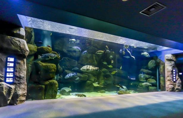宮島水族館最大サイズの「ゆったり水槽」。おなじみのお魚から珍しいものまで多種多様