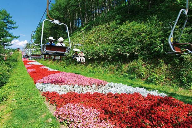 花のじゅうたんを歩くような優雅な空中散歩を楽しめる / 富士見台高原 ロープウェイ ヘブンスそのはら