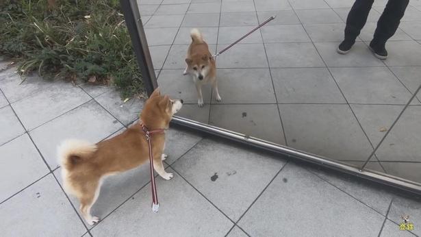 飼い主さんが前にもいる。ということは…