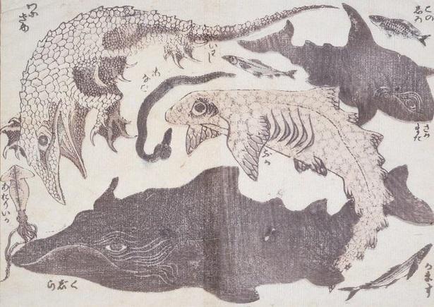 《鯨・鮫ほか》「北斎漫画」二編