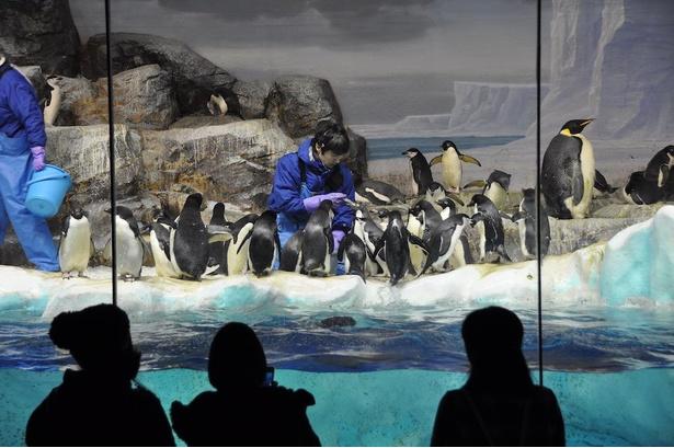 ペンギンがエサを食べる様子を見られるフィーディングタイム