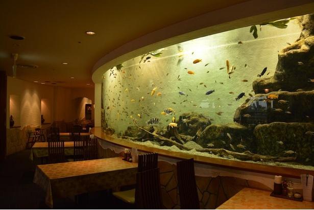 店内に全長8メートルの大型水槽があるレストラン「アリバダ」