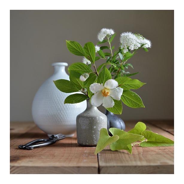 夏椿とシモツケの生け花。この写真のように花瓶も季節によって変えているそう