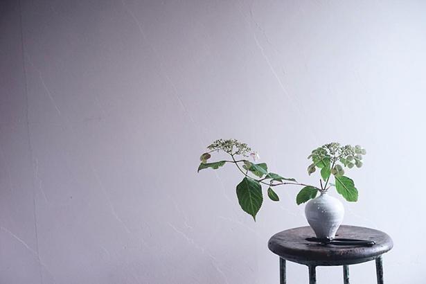 梅雨末期の枯れてきた紫陽花とその季節の光が表現できたため、お気に入りの1枚だという
