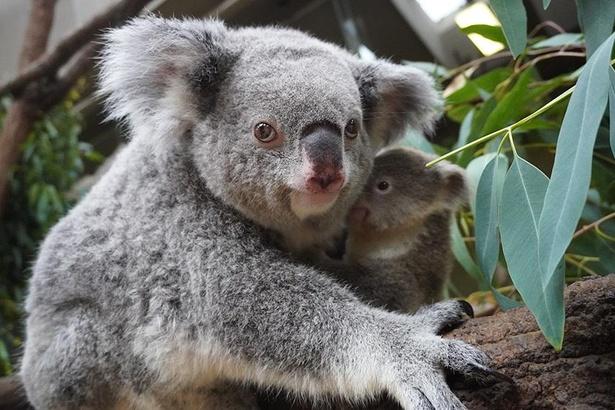 我が子を守るように構える、母親らしい仕草を見せるティリー